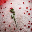 Red and white background with rose — Stock Photo