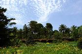 Beautiful nature background of palms — Stock Photo