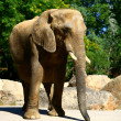 Stock Photo: Beautiful young elephant in the zoo