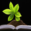 Green plant growth from book — Stock Photo
