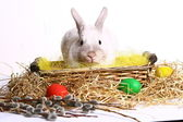 Cute rabbit with easter egg — Stock Photo