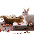 Rabbit with spa products — Stock Photo
