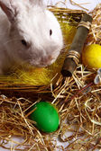 Rabbit with Easter eggs — Stockfoto
