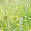 Green grass with flowers — Stock Photo #4376559