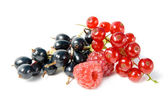 Wild berries. — Stock Photo