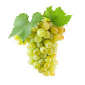 Bunch of white grapes with green leaves. — Stock Photo