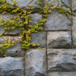 Stone granite wall with the green leaves — Stock Photo