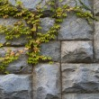 Stone granite wall with the green leaves - Stock Photo