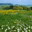 Stock Photo: Floral meadow