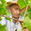 Stock Photo: Senior wine maker