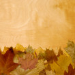 Autumn Leaves over wood — Stock Photo