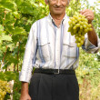Stock Photo: Senior vintner