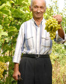 Senior vintner — Stock Photo