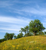 Paesaggio estivo — Foto Stock