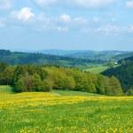 Dandelion field — Stock Photo