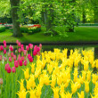 Keukenhof park pond — Stock Photo