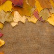 Fallen leaves - Stock Photo
