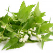 Stinging Nettles - Stock Photo