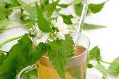 Tea of stinging nettle — Stock Photo