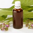 Comfrey Tincture — Stock Photo