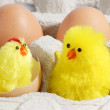 Two Chicks — Stock Photo