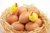 Easter chicks in the nest — Stock Photo