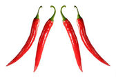 Two pairs of chilies — Stock Photo
