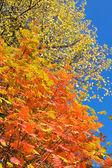 Coronas de otoño — Foto de Stock