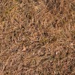 Autumn grass texture — Stock Photo