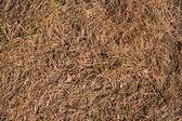 Autumn grass texture — Stock Photo