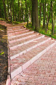 Footway in summer forest — Stock Photo