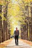 Man on alley in fall forest — Stock fotografie