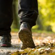 Hiking in autumn forest, exercise outdoors — Stock Photo