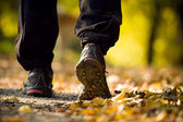 Hiking in autumn forest — Foto Stock