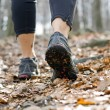 Hiking in autumn forest, walking legs — Stock Photo