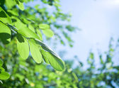 Green fresh leaves — Foto Stock