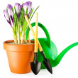 Crocuses and garden tools — Stock Photo