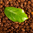 Coffee beans — Stock Photo #5106675