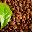 Coffee beans — Stock Photo #5106676