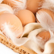 Eggs and feathers — Stock Photo