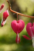 赤いハートの花 — Stock fotografie
