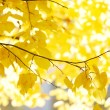 Stock Photo: Yellow leaves background