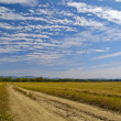 Striped clouds over the cleaned wheaten field — Stockfoto