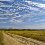 rayé de nuages sur le champ wheaten nettoyé — Photo