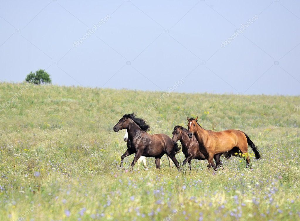 Opposition Reflex in HorsesThink Like a HorseRick Gore