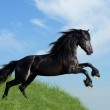 Black horse playing on the field — Stock Photo #4801124