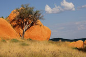Tree and rock — Stock Photo
