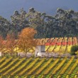 Vineyard landscape - Stockfoto