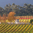 Vineyard landscape - Foto Stock