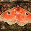 Stock Photo: Colorful moth